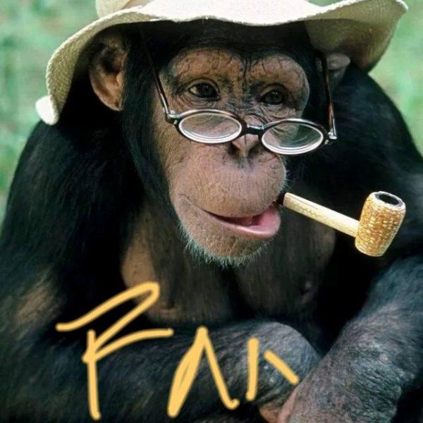 大猩猩理论