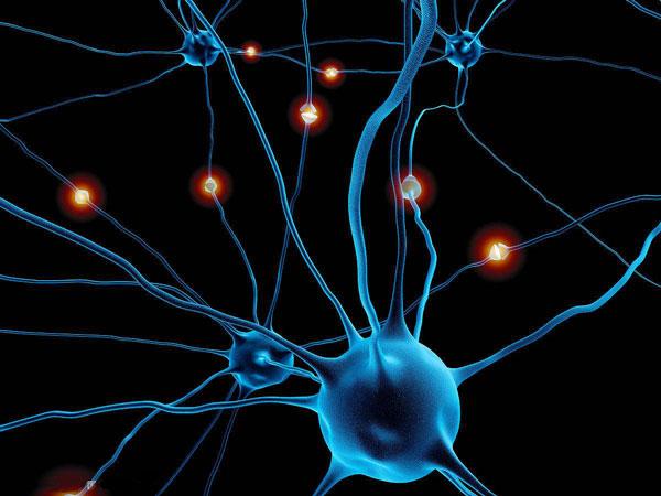 整体性学习是基于大脑结构模型学习理论