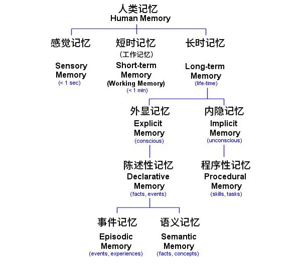 记忆的分类