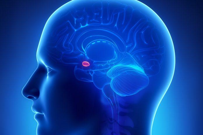 记忆原理-探索记忆与遗忘背后的机制