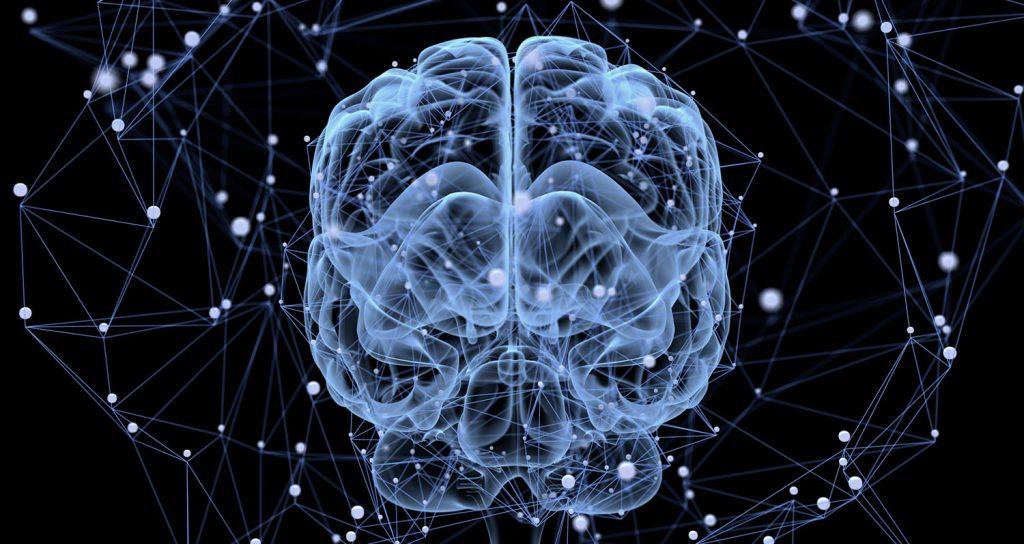 神经可塑性