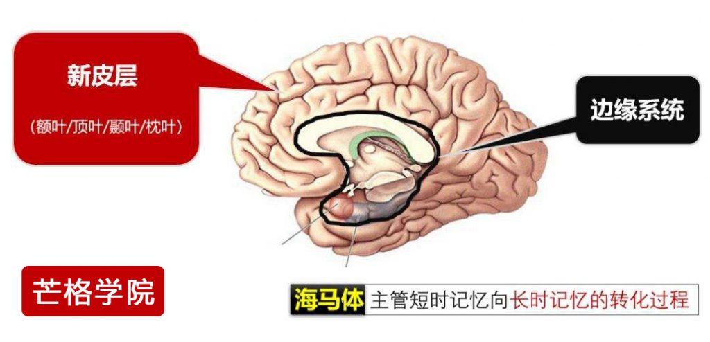 边缘脑负责人所有的行为和决策