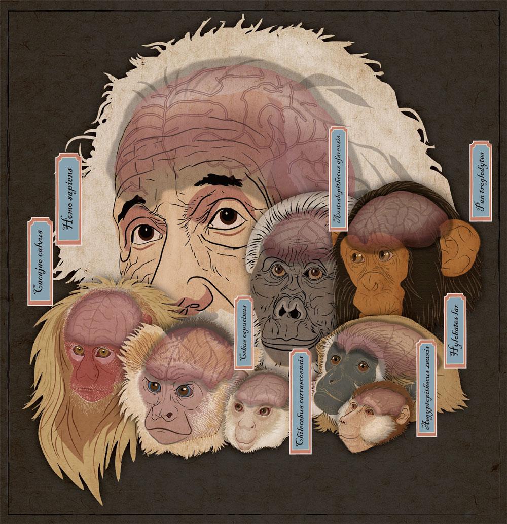 大脑的进化